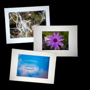 Fleeting world cards home of beautiful greetings cards and photos m4hsunfo
